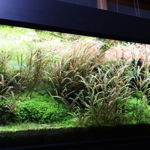 120cm水草水槽x4本の現状