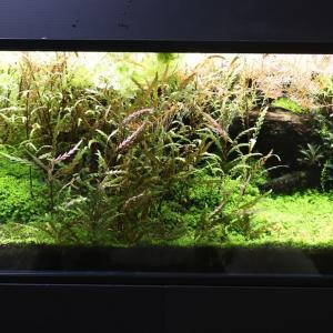 放置しすぎた120cm水槽の有茎草をバッサリ!!・・する予定です(^_^;)