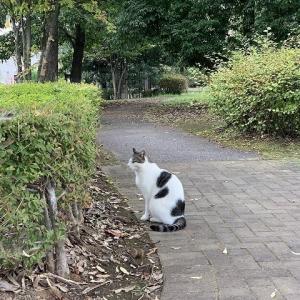公園でチーちゃん