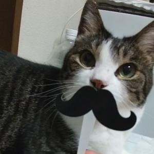 猫の還暦!?