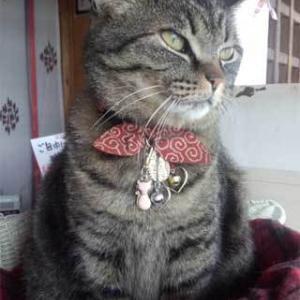 『前玉神社』の猫さん♪@埼玉県