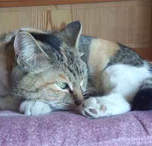 『前玉神社』と猫さんとお花@埼玉県(1)