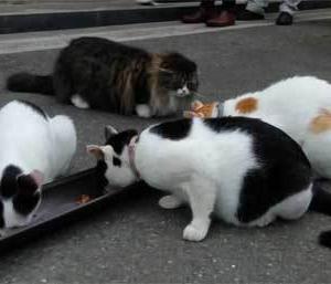 『御誕生寺』の猫さん♪@福井県(その2)