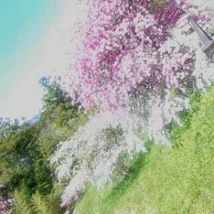 【掛川市】4月に撮影した景色@静岡県