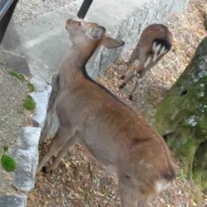 奈良ぶらり&可愛い鹿さんたち@奈良県(1)