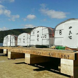 桧原湖、早稲沢のドーム船造り❗?え?今頃?