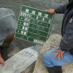 会津大川放流情報❗