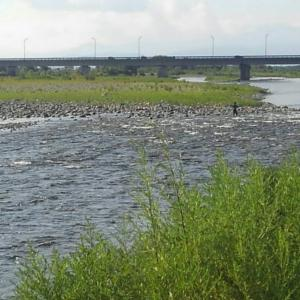 半月振りの会津大川、半月振りの鮎釣り