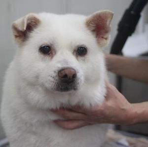 2020/07/15 セルフシャンプーに来てくれたミックス犬のディープちゃん(^^♪