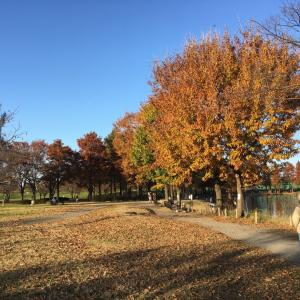舎人(とねり)公園散歩ドライブ