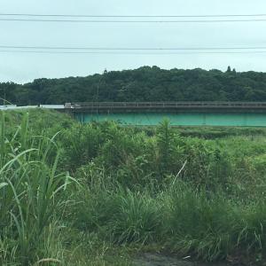 印旛新川.桑納川(桑納橋〜富士美橋間)と甚兵衛沼(管理釣場)⑯