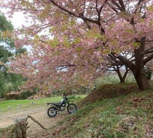3月1日に「朝散歩」します。