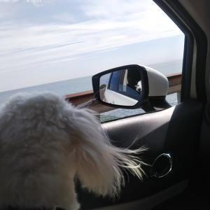 伊豆・城ヶ崎海岸へ①熱海でランチ