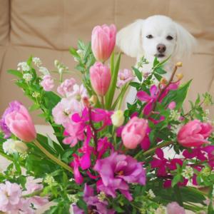 春らしいお花と届いた物