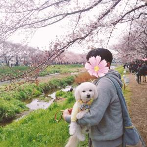 平成最後のお花見♪