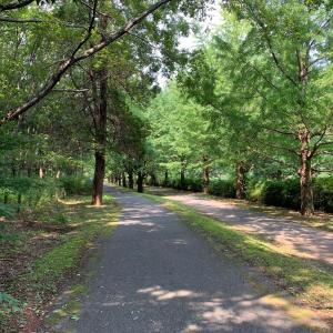 公園で森林浴とキャラ弁