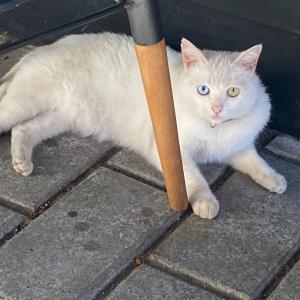 Van猫発見❣️
