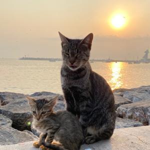 可愛い〜猫の親子