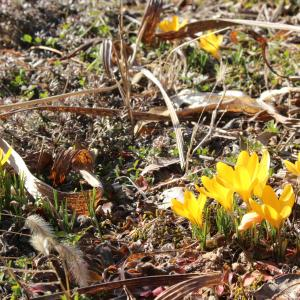少し早めの春