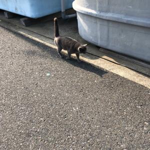 漁港の猫さん