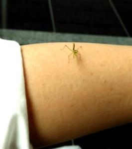 English Diary:A baby mantis