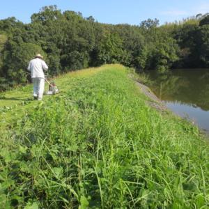 ため池の草刈り