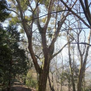 松尾寺山  (2) ~コースと樹木~