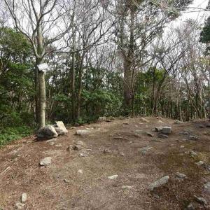 野登山 (1) ~ミツマタの咲き誇る谷を歩く~