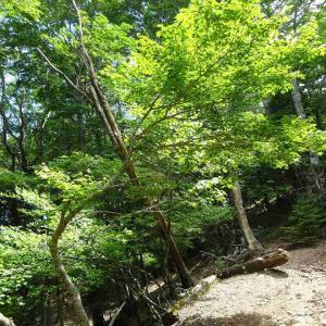 勝負塚山  (2) ~コースと樹木~