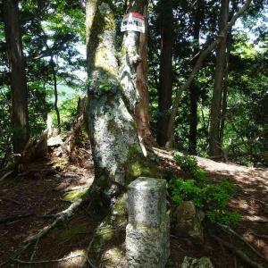 勝負塚山 (3) ~まとめ : 濃い緑の中を歩く~