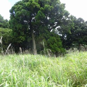 太鼓山  (2) ~コースと樹木~