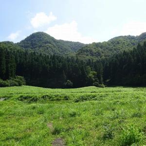 杣山 (3) ~まとめ : 少しワイルドな里山~