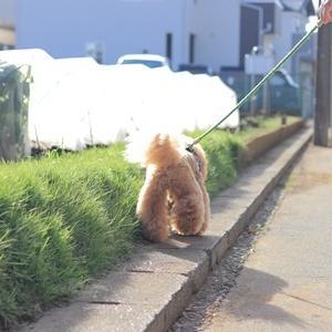 ご近所ぽっぽ~♪
