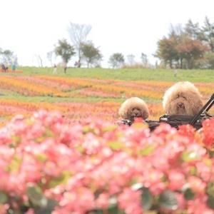 2019年10月 車中泊の旅 ~那須フラワーワールド①~