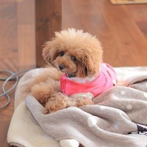 その毛布はやめてほしい。