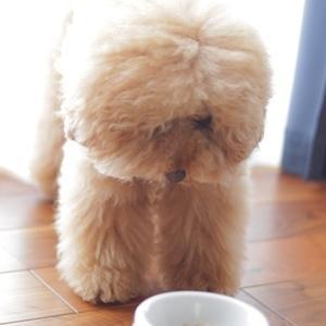 食べないくん。