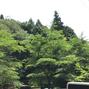 今日の清川しっぽ村