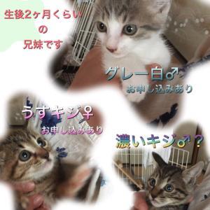 新しい飼い主さん募集中【施設外保護】