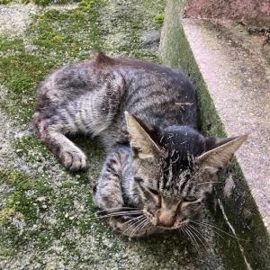 施設外保護にて里親さんを探していた猫さんのその後
