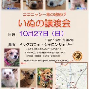 【拡散希望】犬の譲渡会10/27(日)松戸市