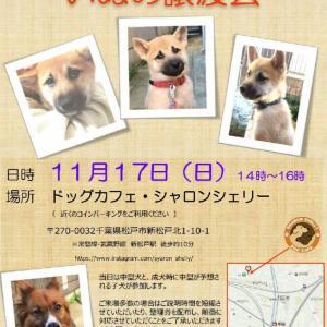 【拡散希望】本日犬の譲渡会&カレンダー販売最終日