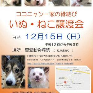 【拡散希望】12/15子犬猫の譲渡会、おとな犬猫もきます