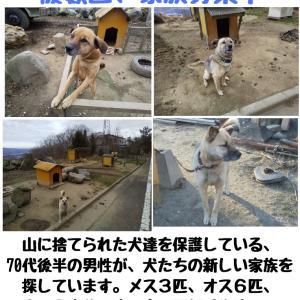 【拡散希望】福島県いわき市の犬(子犬家族決定)