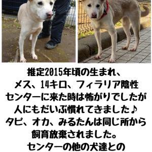 【拡散希望】千葉市動物保護指導センター犬、家族募集中