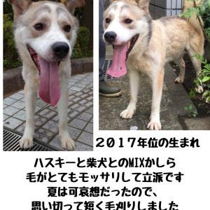 【拡散希望】センター収容犬家族募集中、千葉市