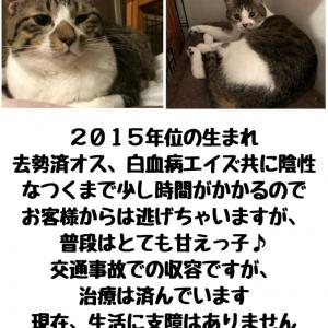 【拡散希望】猫の星矢家族募集中&ゲンキ君の事