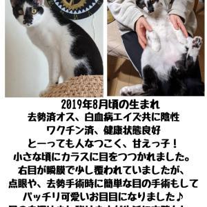 【拡散希望】子猫のタカちゃん家族募集中、千葉市