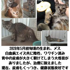 【拡散希望】子猫のpipiちゃん家族募集中★千葉市