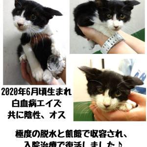 【拡散希望】千葉市センター収容中の子猫あらた君