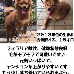 【拡散希望】千葉市動物保護指導センター収容犬、家族募集中